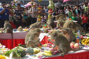 พาชมเทศกาลเลี้ยงโต๊ะจีนลิงที่จังหวัดลพบุรี